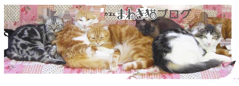 ネコカフェまねき猫